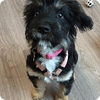 Adopt A Pet :: Moxie - San Diego, CA