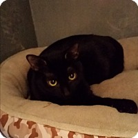 Adopt A Pet :: Sissy (in CT) - Manchester, CT