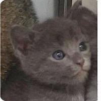Adopt A Pet :: Granite - Springdale, AR