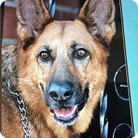 Adopt A Pet :: PARIS VON PENN - Los Angeles, CA