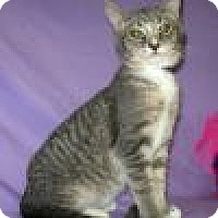 Adopt A Pet :: Monty - Powell, OH
