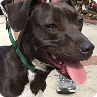 Adopt A Pet :: Bean -