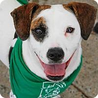 Adopt A Pet :: Priscilla - Washington, DC