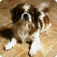 Adopt A Pet :: Godfrey - Oswego, IL