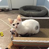 Adopt A Pet :: Paris - Covington, KY