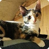 Adopt A Pet :: Galadriel - Morganton, NC
