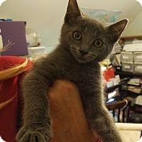 Adopt A Pet :: Rosie - Philadelphia, PA