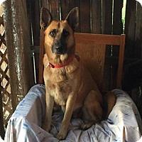 Adopt A Pet :: Starr - Littleton, CO