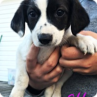 Adopt A Pet :: Etta - Virginia Beach, VA