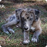 Adopt A Pet :: Ian - Weeki Wachee, FL
