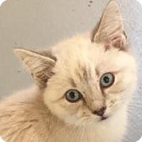 Adopt A Pet :: JERICHO - Fountain Hills, AZ