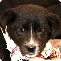 Adopt A Pet :: Blossom Possum~adopted! - Glastonbury, CT
