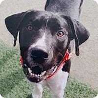 Adopt A Pet :: Zeus - waterbury, CT
