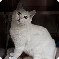 Adopt A Pet :: Sniffles - St. Petersburg, FL