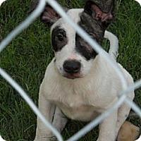 Adopt A Pet :: Slipper - Plano, TX
