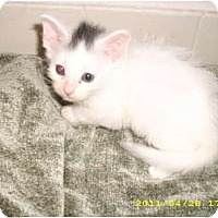 Adopt A Pet :: Mister - Simpsonville, SC