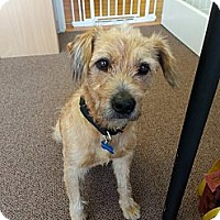 Adopt A Pet :: SCRUFFY - Malibu, CA