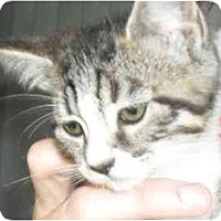 Adopt A Pet :: Jennifer - Jacksonville, FL