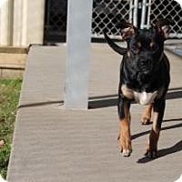 Adopt A Pet :: Taryn - Albany, GA
