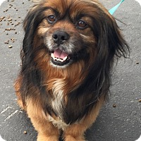 Adopt A Pet :: SKIPPER - SO CALIF, CA