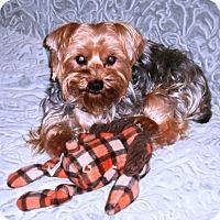 Adopt A Pet :: Eddie - Conroe, TX