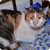 Adopt A Pet :: Marilyn - Medina, OH