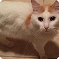 Adopt A Pet :: Lily - East Hanover, NJ