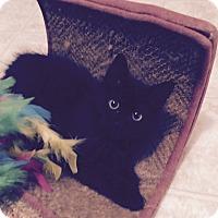 Adopt A Pet :: Button - Richmond, VA