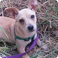 Adopt A Pet :: Bambi - Leming, TX