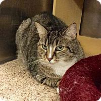 Adopt A Pet :: Emma - Colmar, PA