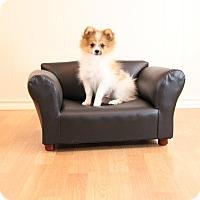 Adopt A Pet :: Beethovan - conroe, TX