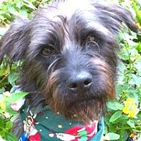 Adopt A Pet :: Tony-ADOPTION PENDING - Boulder, CO