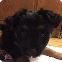 Adopt A Pet :: Prince Eric - Princess Pup - Encino, CA