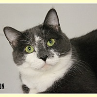 Adopt A Pet :: Houston - New Richmond,, WI