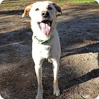 Adopt A Pet :: Tybee - Falls Church, VA