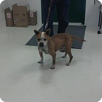 Adopt A Pet :: Jerry - Mt. Gilead, OH