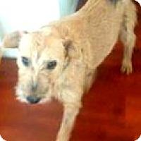 Adopt A Pet :: Cleo - Boulder, CO