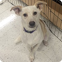 Adopt A Pet :: Grace in CT - Manchester, CT