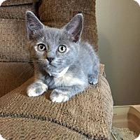 Adopt A Pet :: Chaucer - Putnam, CT