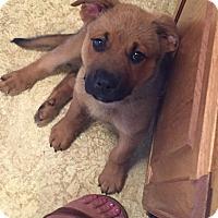 Adopt A Pet :: Teddy B-Adopted! - Detroit, MI