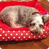 Adopt A Pet :: Princess - Santa Fe, TX