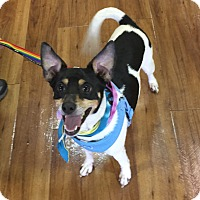 Adopt A Pet :: Bryce - Ft. Lauderdale, FL