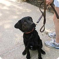 Adopt A Pet :: Frankie - Elyria, OH