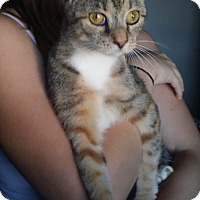 Adopt A Pet :: Riley - South Bend, IN
