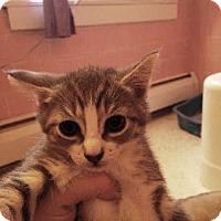 Adopt A Pet :: Elsa - Putnam, CT