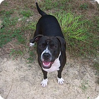 Adopt A Pet :: Dozer - Homosassa, FL