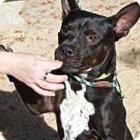 Adopt A Pet :: Rico - Pensacola, FL
