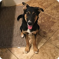 Adopt A Pet :: Case (Cat Friendly) - Nashua, NH