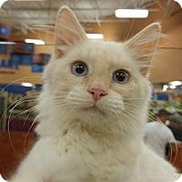 Adopt A Pet :: MANNY - Powder Springs, GA