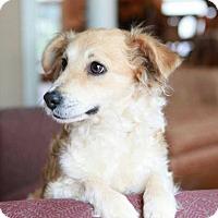 Adopt A Pet :: Della - Matthews, NC